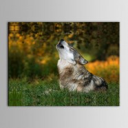 Printed Animal  Oil Painting (DK-PH-DH18)