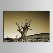 Printed Landscape Oil Painting (DK-PH-DH27)